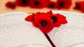 El camino hacia la luz: Sura Al-Ahcaf , versos 24-28