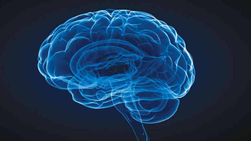 Estudio revela que el consumo de esteroides anabólicos envejece el cerebro.