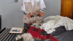 Vídeo: 185 crías de tortuga en una maleta en aeropuerto de Galápagos