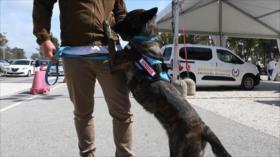 Perros detectan el coronavirus en Roma