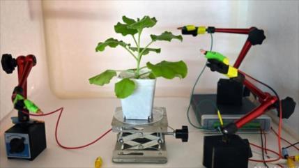 """Científicos crean dispositivo para """"comunicarse"""" con las plantas"""
