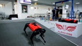 Perro robot chino, más rápido del mercado, imita a uno real