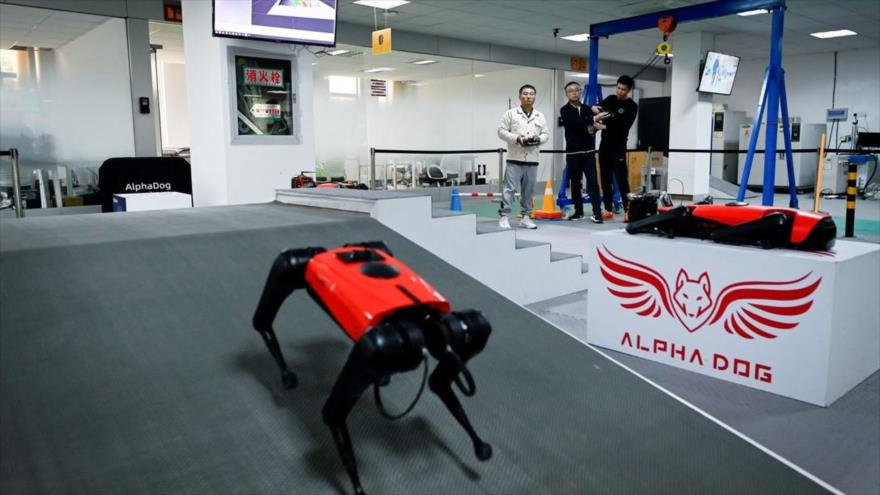 El perro robot Alpha Dog en la sede de la compañía Weilan, en Nankín, China, 2 de abril de 2021. (Foto: AFP)