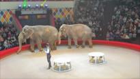 El Toque: Dos elefantes se pelean en plena función de un circo, ¿Por qué los gorilas se dan golpes en el pecho?, Una madre afgana de 26 años arriesga su vida para librar a su país de las minas