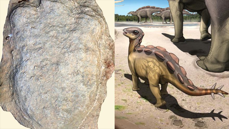 Huellas de un dinosaurio de hace 130 millones de años, descubiertas en el condado de Tongjiang, en el suroeste de China.