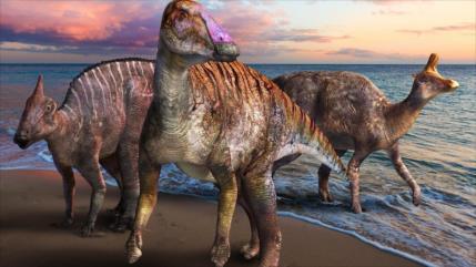 Paleontólogos identifican una nueva especie de dinosaurio en Japón