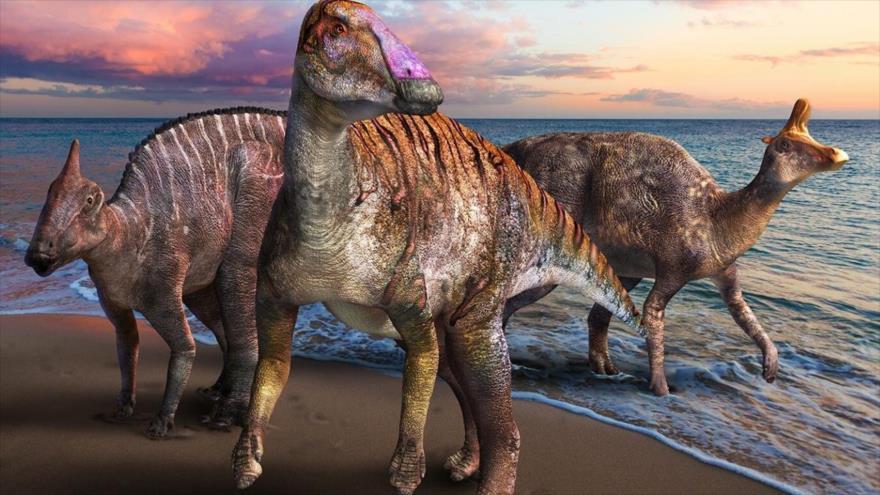 El Yamatosaurus Izanagii, la nueva especie del dinosaurio de pico de pato, identificado en Japón.