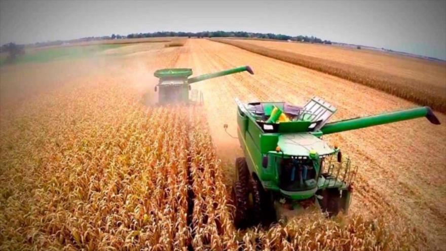 Un campo de maíz en Argentina.