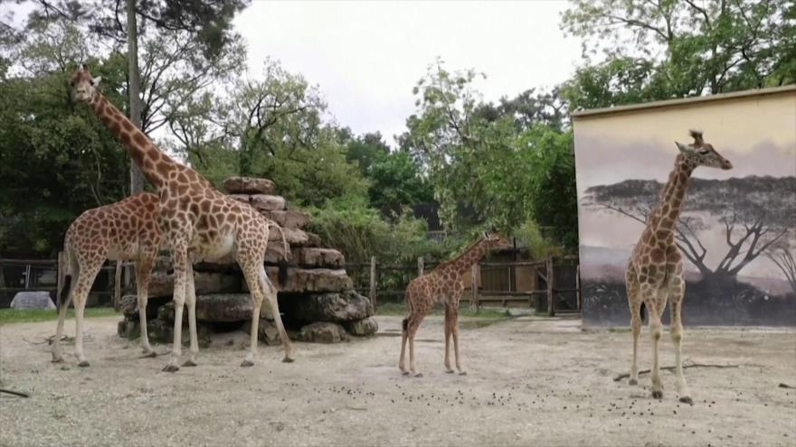 El Toque: Irán abre parque Cultural Nacional de la Unesco, Taxi del futuro, Jirafa nace en zoológico en Francia