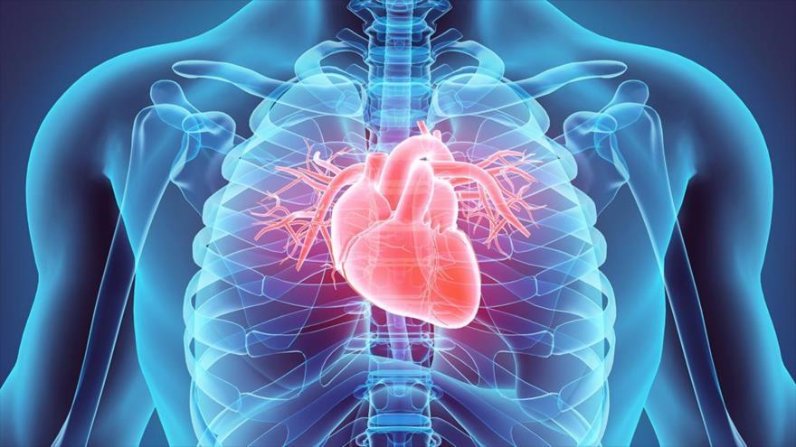 Un nuevo estudio sugiere que cuanto más saludable tengamos el corazón mejor podemos hacer frente a la enfermedad del coronavirus.