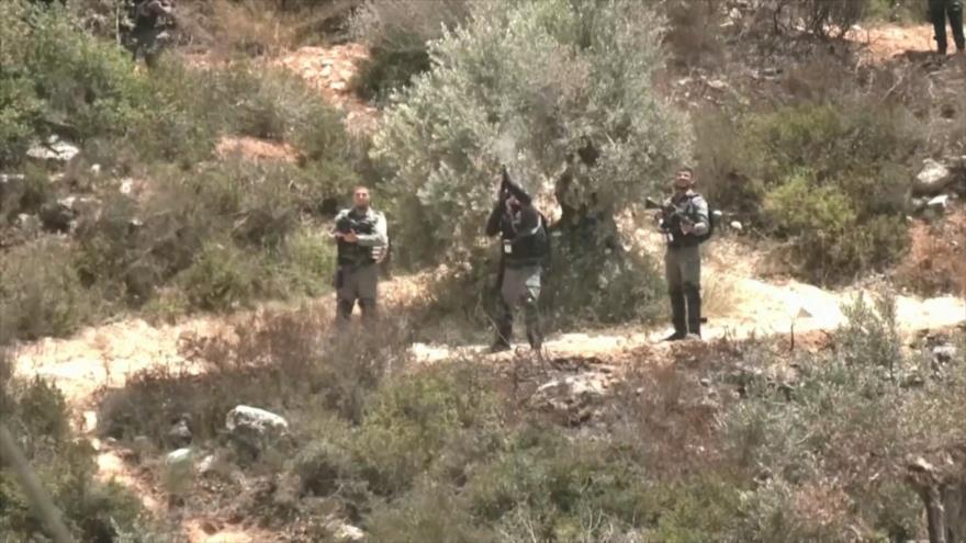 Palestina, encrespada de indignación por nuevo crimen israelí