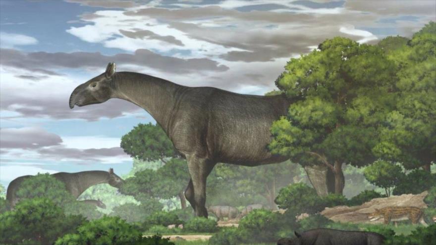 Interpretación artística del Paraceratherium linxiaense realizada por la Academia de Ciencias de China.