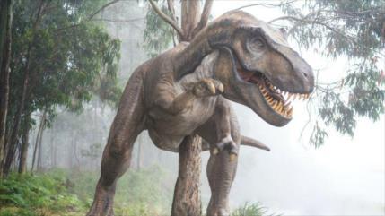 Arqueólogos hallan huesos de temibles tiranosaurios en Alaska