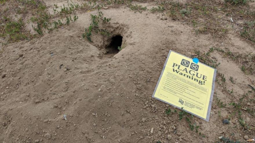 Un anuncio de advertencia sobre peste al lado de un agujero de un perrito de las praderas en Boulder, Colorado, EE.UU. (Foto: Foxnews)
