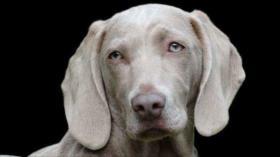 Estudio: Los perros pueden comprender cuando alguien miente