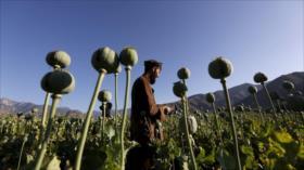 'EEUU creó laboratorio de drogas a escala mundial en Afganistán'