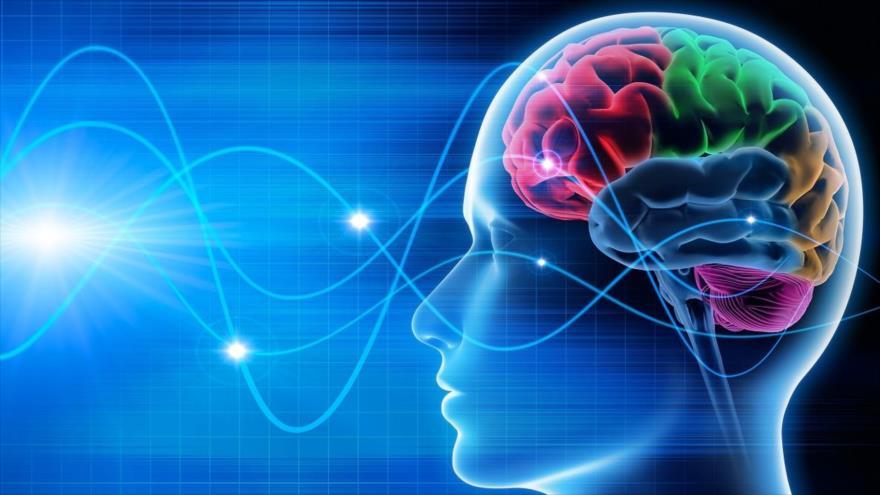 El cerebro es capaz de predecir el futuro, basándose en la melodía que escucha, según científicos.