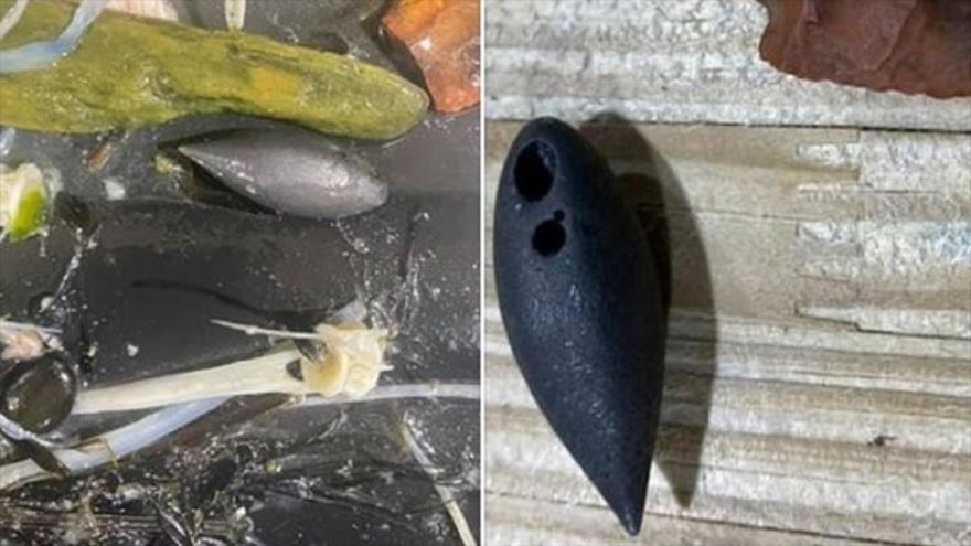 Una plomada (un instrumento pesado con forma de lágrima) encontrada en el interior de un cocodrilo cazado en Misisipi.