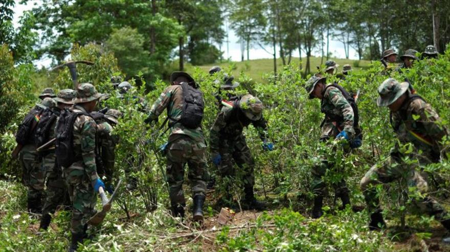 Fuerzas de seguridad incautan plantaciones de hoja de coca en Chimore, Bolivia, 18 de enero de 2019.