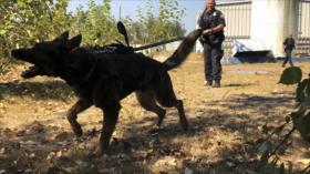 Vídeo: Policías dejan que su perro muerda a detenido negro