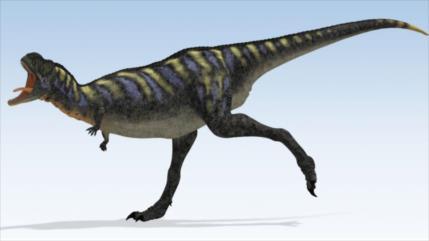 Descubren una nueva especie de dinosaurio carnívoro en Brasil