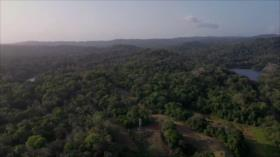 Políticas públicas en Panamá atentan contra el medio ambiente